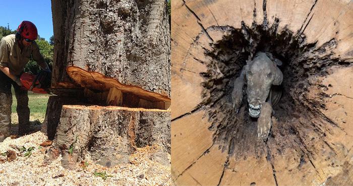 60 साल पुराने पेड़ पर जब चली कुल्हाड़ी, अंदर के दृश्य ने सबके होश उड़ा दिए