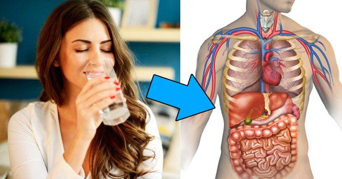 सुबह खाली पेट पानी पीना, सुबह खाली पेट गुनगुना पानी पीने के फायदे